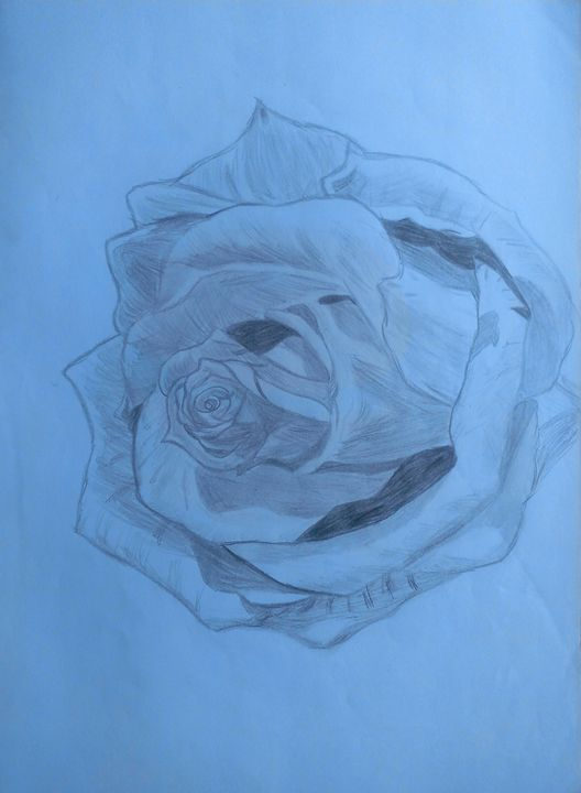 Blossoming rose - By me