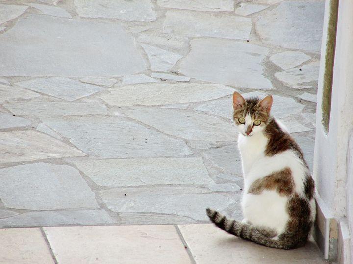 Greek Cat - greece on canvas