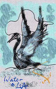 swan water life