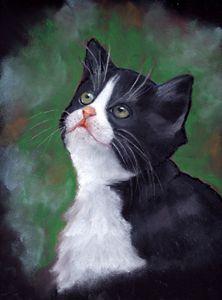 Tuxedo Kitten Looking Up, Oil Pastel
