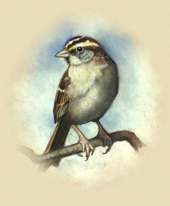 White-throated Sparrow in Pastel - Joyce's Art