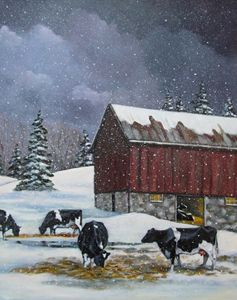 Holstein Cows in Snowy Barnyard