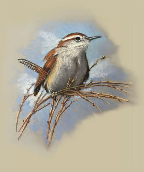 Small Wren in Pastel - Joyce's Art