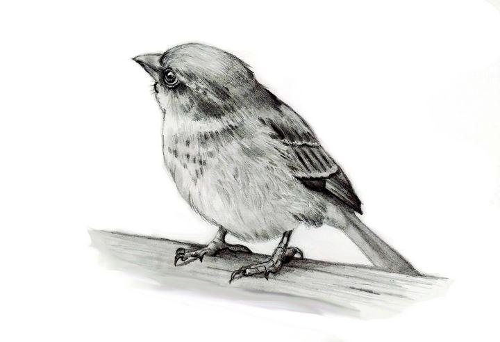 Drawing of small bird