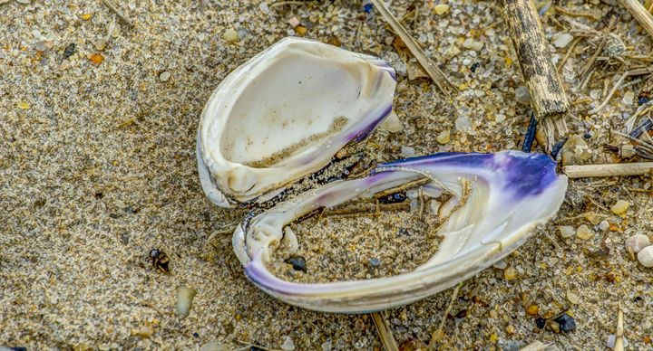 Clam in the Sand - Joe Campbell's Photo Art Gallery