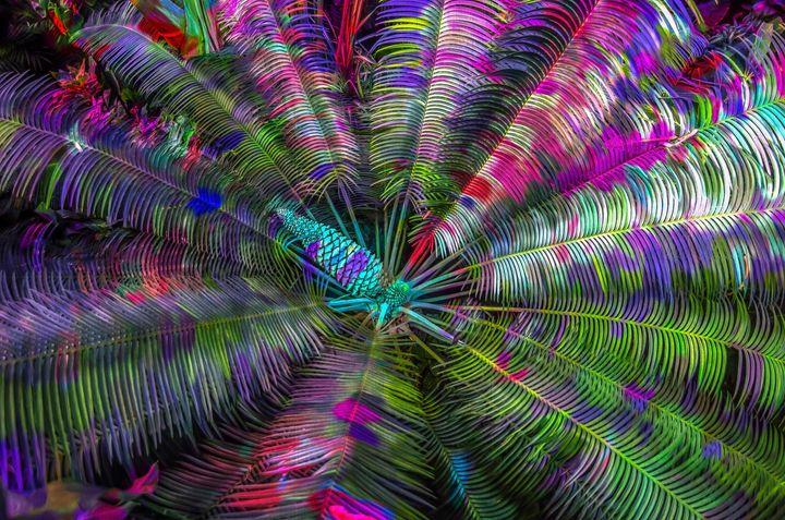 Color Wheel - Joe Campbell's Photo Art Gallery