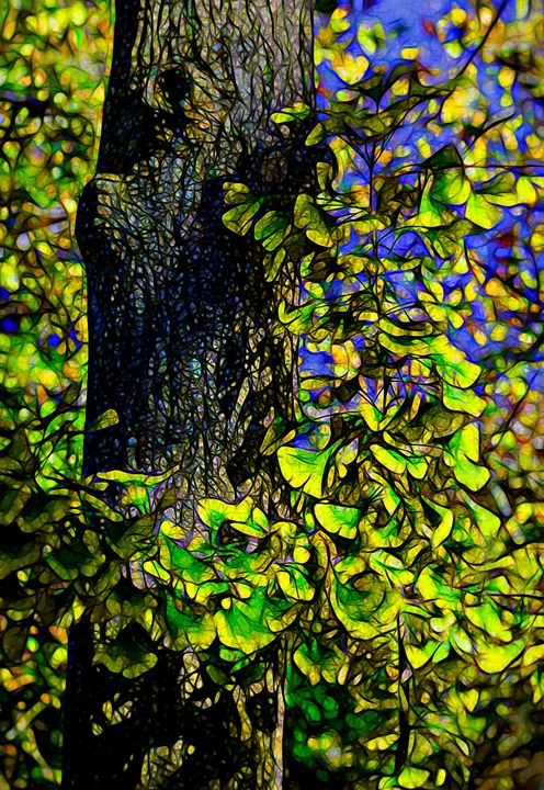 Ginkgo Tree - Joe Campbell's Photo Art Gallery