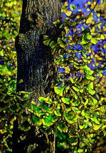 Ginkgo Tree - Joe Campbell's Photo Art Gallery