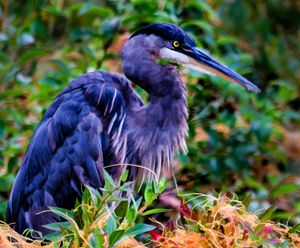 Purple Bird - Joe Campbell's Photo Art Gallery