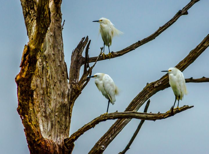 Out on a Limb - Joe Campbell's Photo Art Gallery