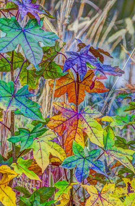 Fall of Summer - Joe Campbell's Photo Art Gallery