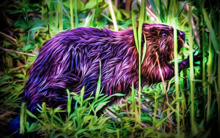 Beaver in the Reeds - Joe Campbell's Photo Art Gallery