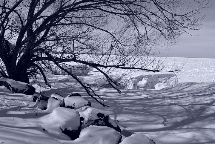 Winter Beauty - A UniQUE Perspective