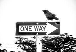 Crow's way