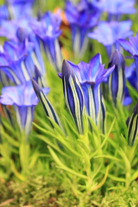 Beautiful Blooms (3) - ChrisieRandle