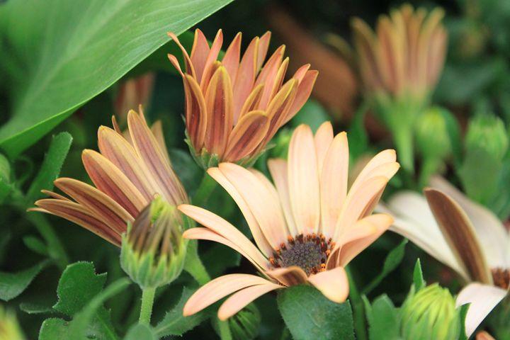 Beautiful Blooms (2) - ChrisieRandle