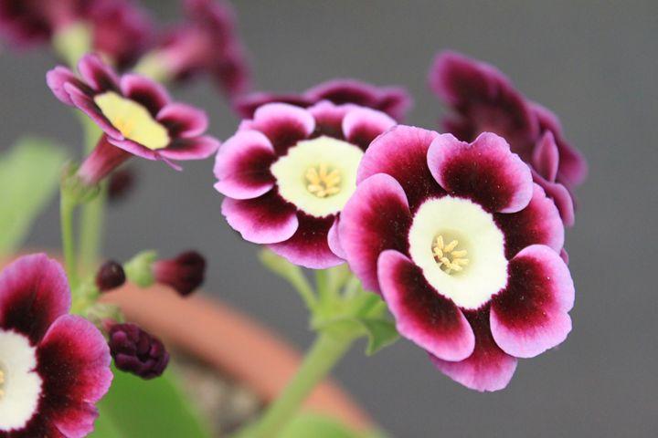 Beautiful Blooms (8) - ChrisieRandle