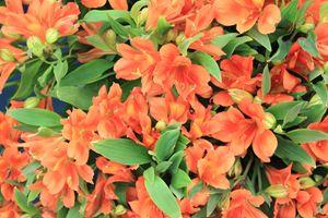 Beautiful Blooms (1)