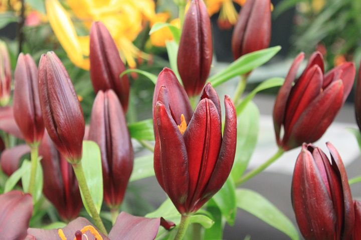 Beautiful Blooms (10) - ChrisieRandle