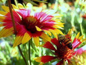 Pollination Series #3