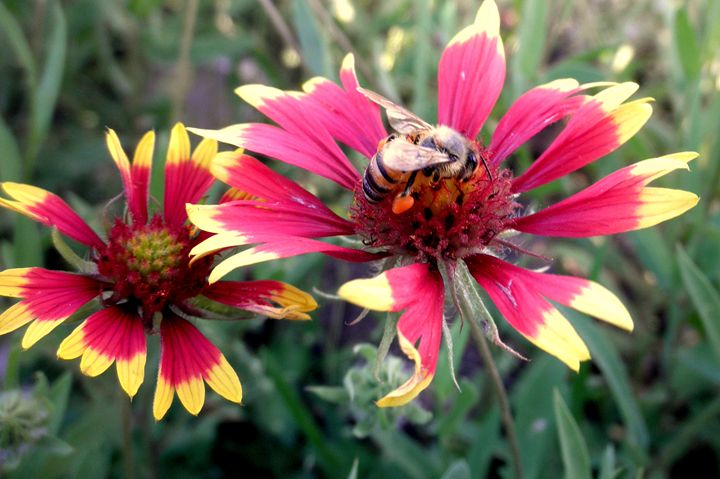 Pollination Series #1 - Clearview237
