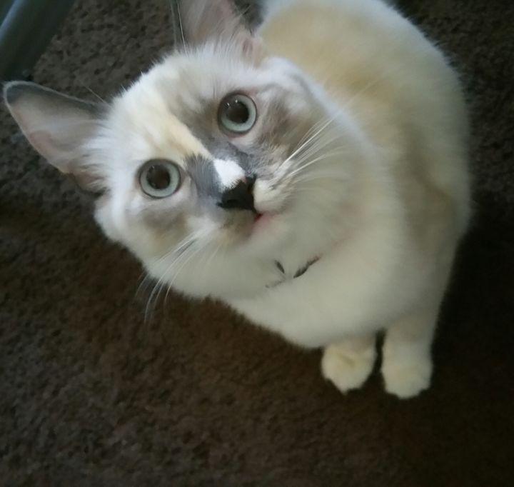 cutie - nirka