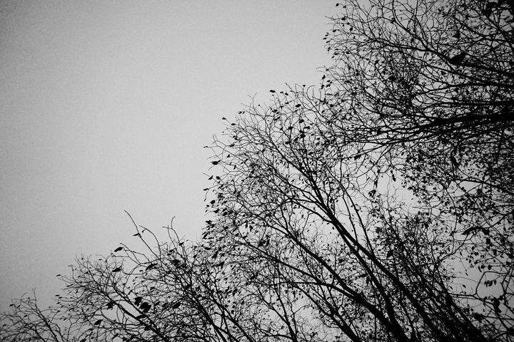 Empty Trees - Christine Solomon