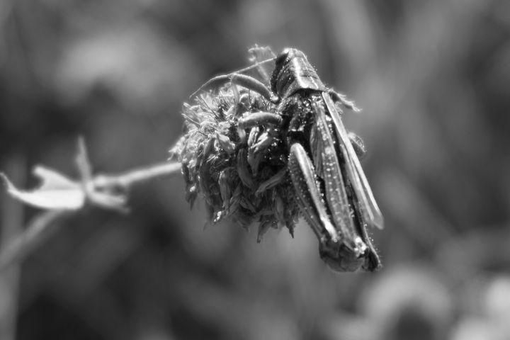 Grasshopper 2.0 - Christine Solomon
