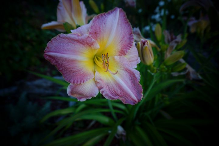 From my sisters flower garden - Christine Solomon