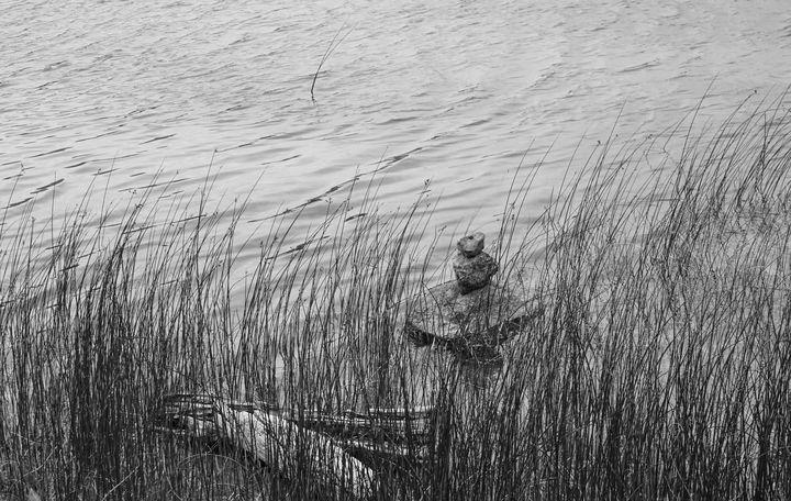 Reeds - Christine Solomon