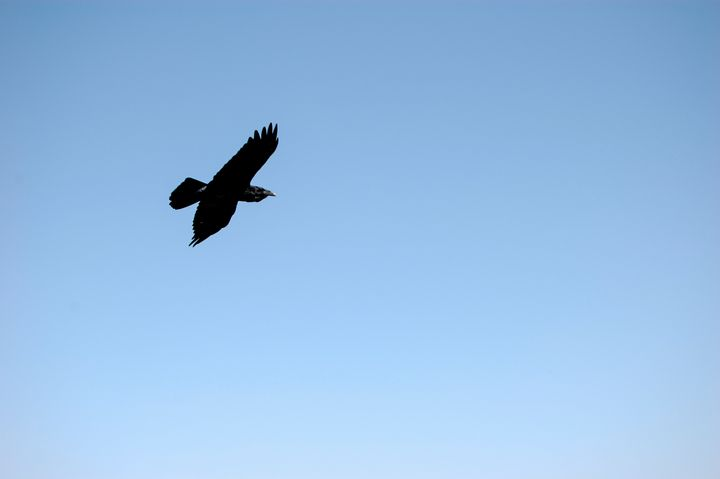 Blackbird - Christine Solomon