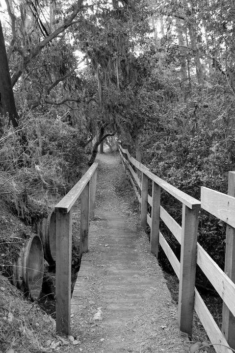 Bridge To Everywhere - Christine Solomon