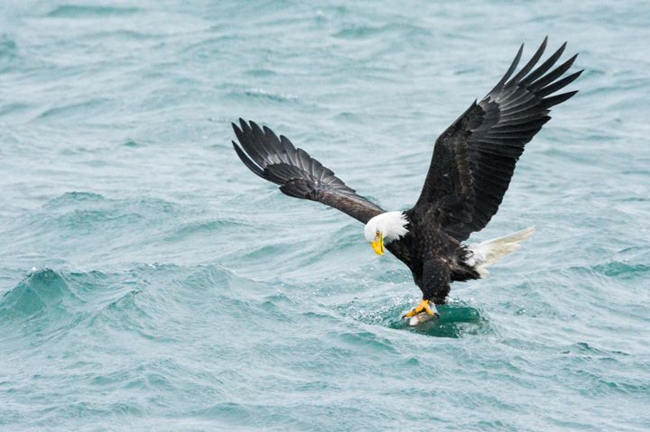 eagles catch - Wanda Nuttall