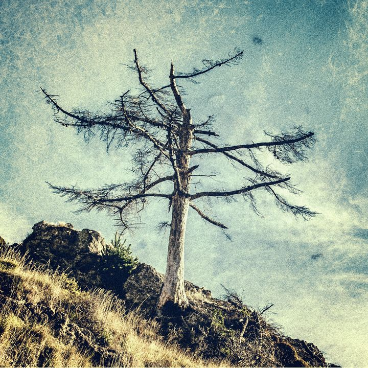 One Tree - Lee Malzard Photography