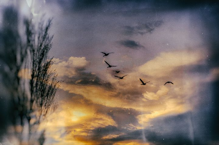 Flock - Lee Malzard Photography
