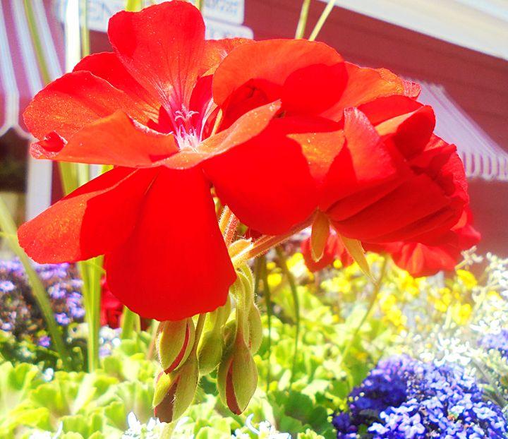 Red Flowers - Sandstorm