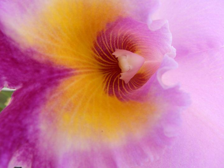 Flowerful - AkrobatX