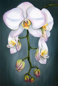 Orchideas - Neringa Jakimcik