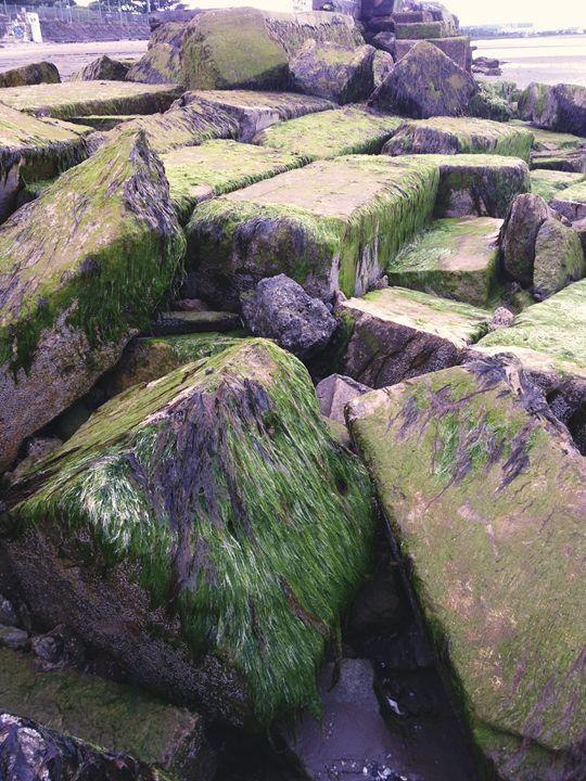 Seaweed Rocks - Aga