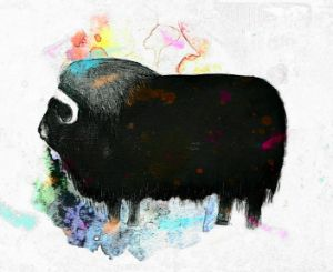 Musk Ox dreaming in colors
