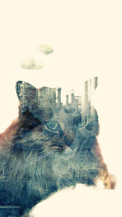 Urban Cat - The Adhizen