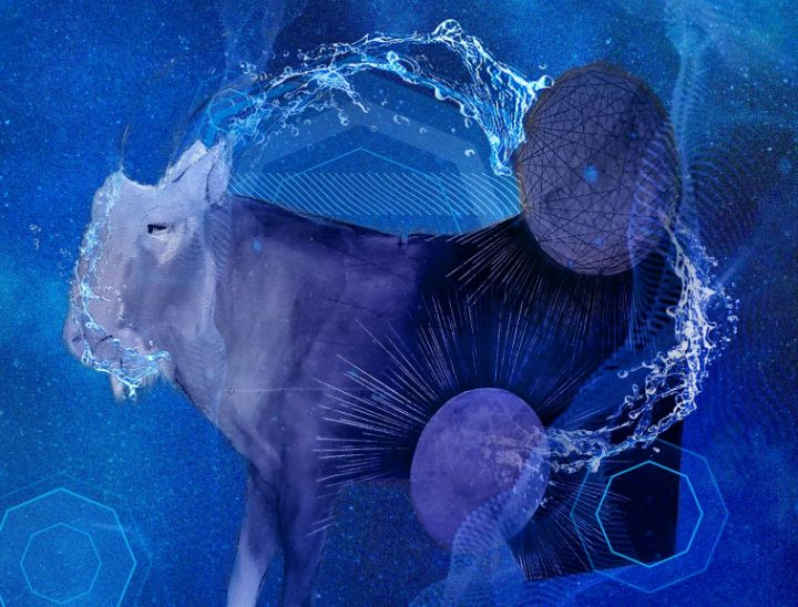 Elemental Goat - Water - The Adhizen