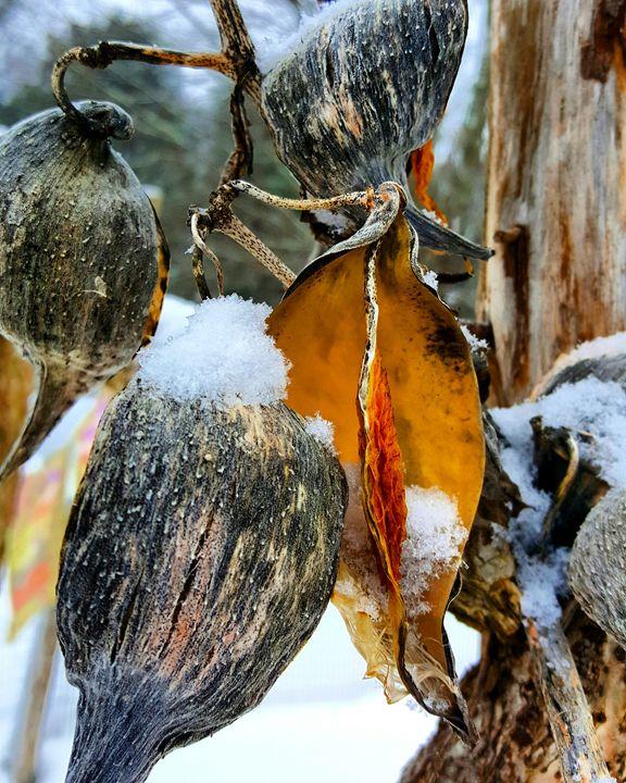 Winter Pods - The Adhizen