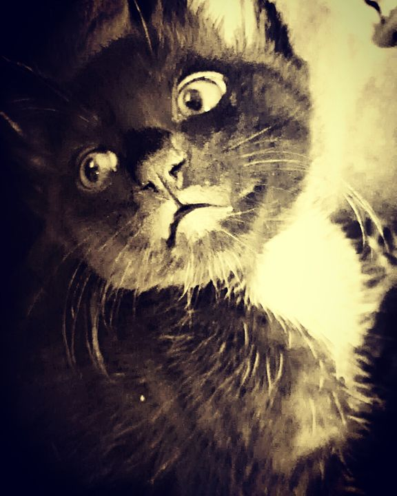 The Black Kitten - The Adhizen