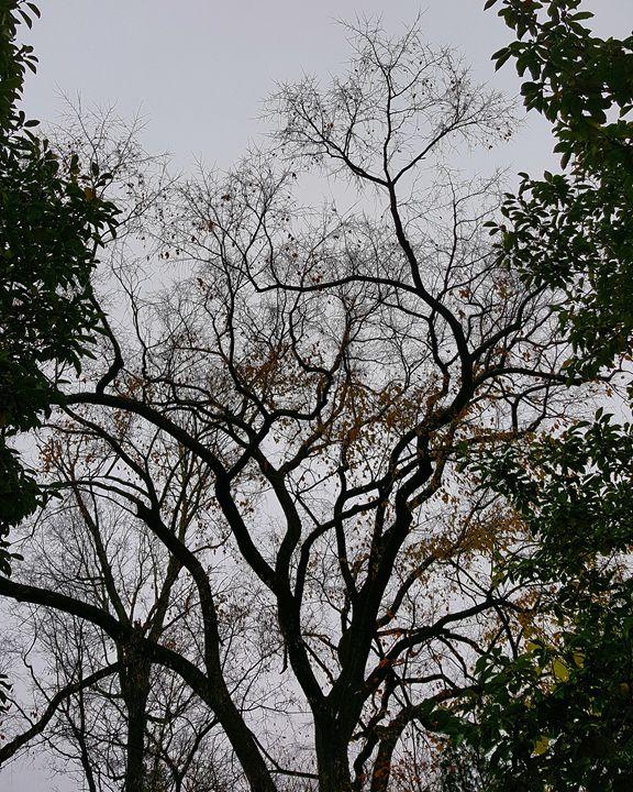 Guardian Tree - The Adhizen