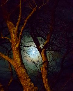 Night Trees With The Moon