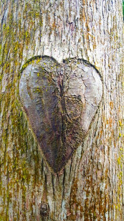 Tree Graffiti - The Adhizen