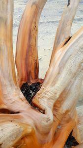 Naked Wood