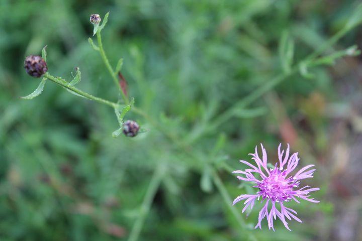 Odd Wild Flower - Angela Ennis