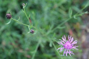 Odd Wild Flower